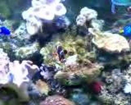 Aqua mini reef