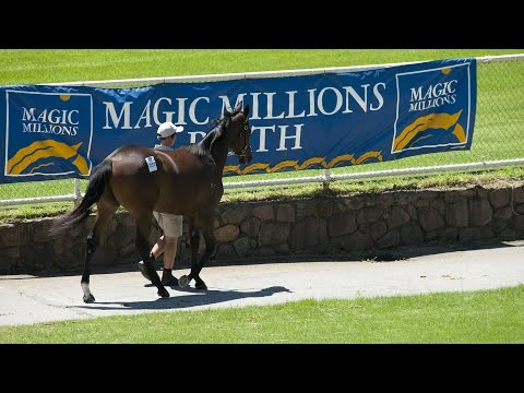 2015 Perth Yearling Sale Day 2