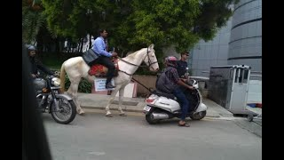 Software Engineer Rides Horse On Last Day Of Office   ABP News