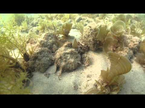 Documenting Marine Ecosystems with the Kuwait Dive Team