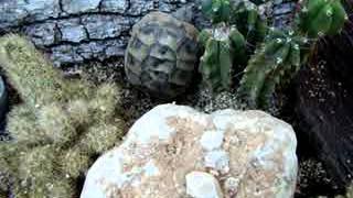 Turtle's Escape From Terrarium