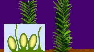 Sự sinh sản của rêu