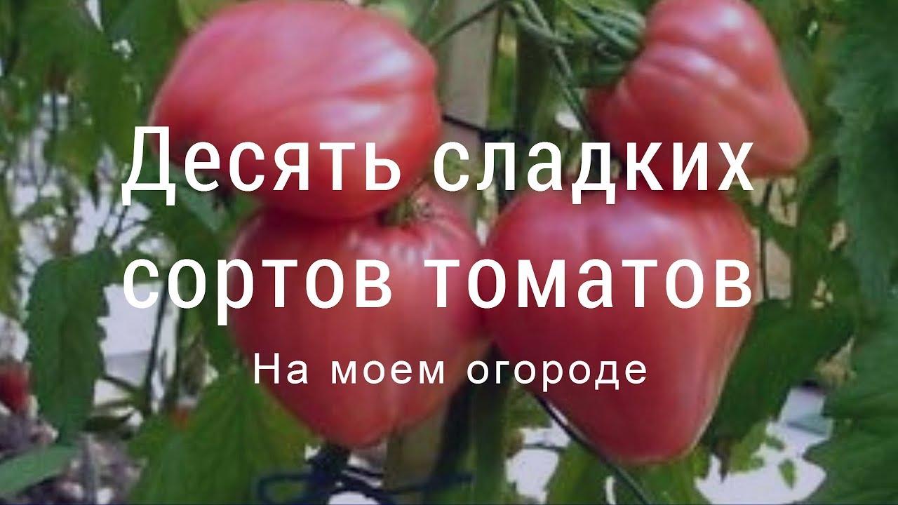 сорта самых сладких томатов