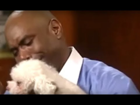 Uplifting - Here's The Judge Judy Dog Clip That's Making Everyone Cry