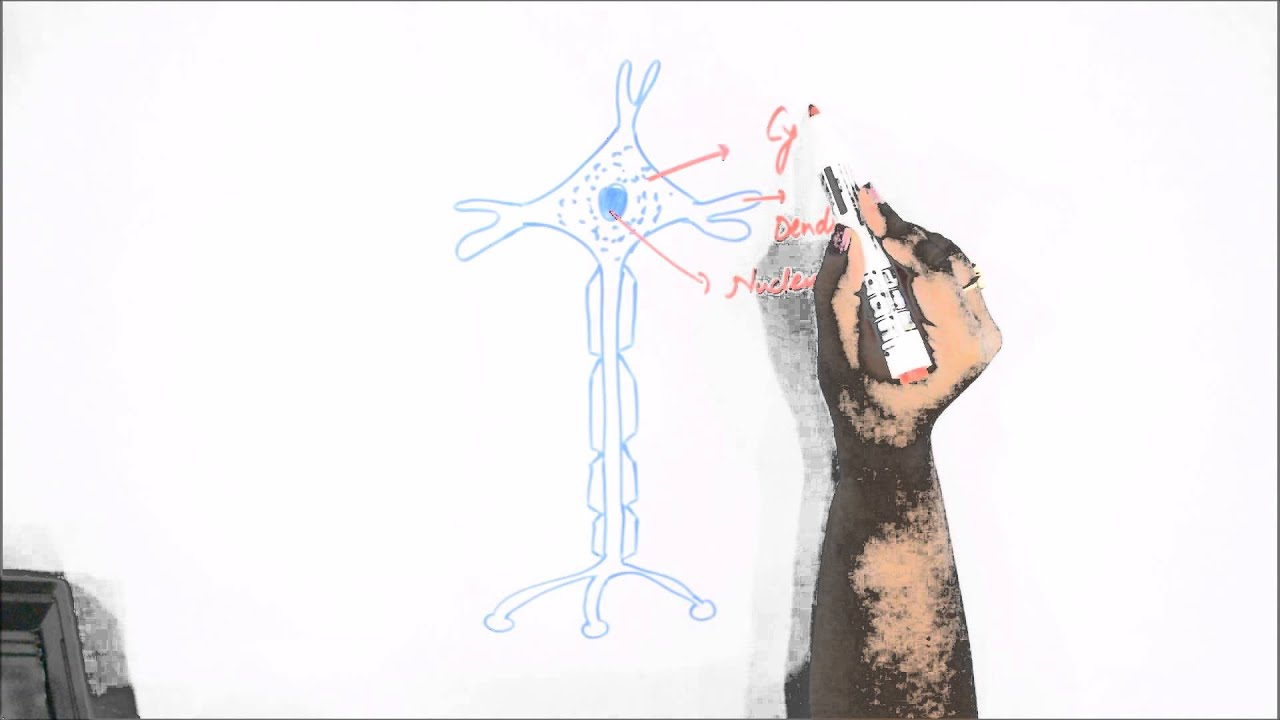 How to draw human neuron or nerve cell youtube ccuart Choice Image