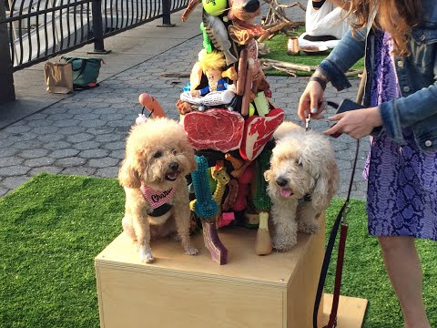 Art Exhibition For Dogs in NYC