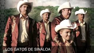 Los Gatos de Sinaloa. El corrido del invalido(everardo) Ft los autenticos de durango