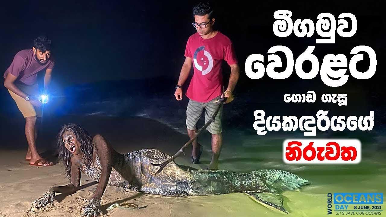 Download මීගමුව වෙරළ තිරයට ගොඩ ගැසූ දියකිඳුරියගේ නිරුවත | Real Mermaid caught in Sri Lanka | TRIP PISSO