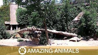 Lion Sneaks Up On Heron In Zoo