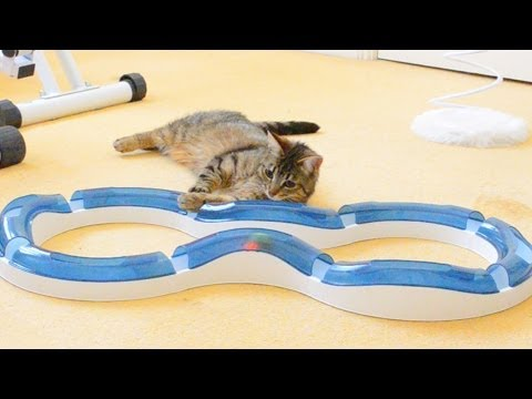 Cat Toy Roller Circuit | Squash