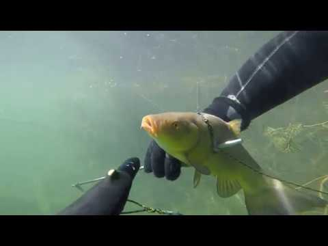 Spearfishing Estonia