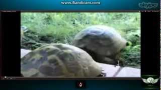 gurls on skype talk about turtle porn
