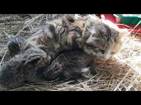 Дальневосточных котят нашла мама-кошка!