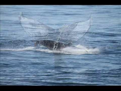 OCEANO STORIA relax musica Depuratore Depuratori Depurazione Acqua osmosi inversa WWW.GOODNEWS.WS