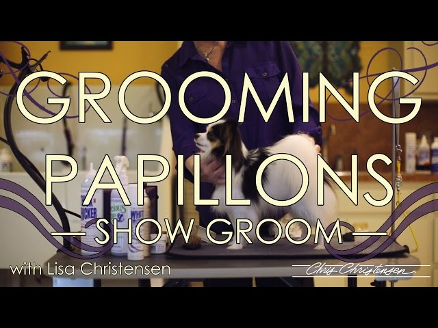 Papillon Grooming with Lisa Christensen — Show Groom