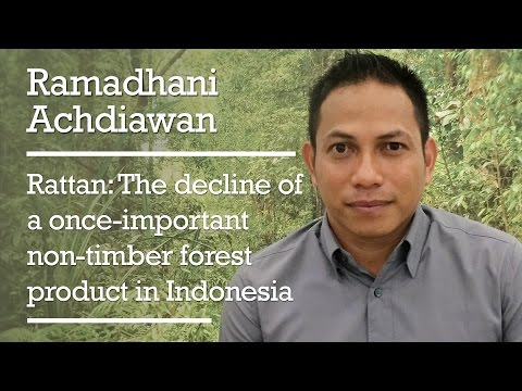 Ramadhani Achdiawan - Rattan: The decline of a once-important non-timber forest product in Indonesia