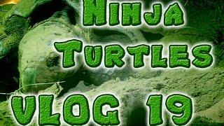 Turtles 2 - Schildkröten in Australien -  | #Australien VLOG 19