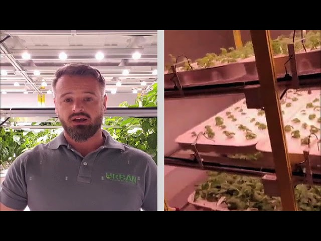 Urban Cultivation CEO on 'Food Matters' - eNCA News
