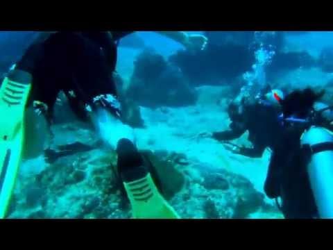 Bali Hai Diving Adventures PADI Open Water Diver Course