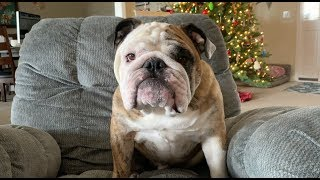 Reuben the Bulldog: A.P.R.