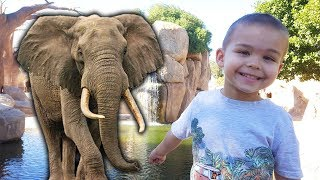 Funny Baby in Valencia Zoopark and Outdoor Playground for Kids Family Fun Playtime