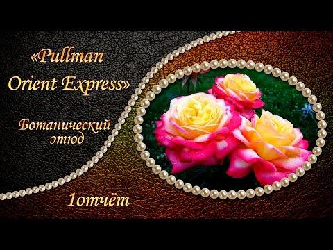 Вышивка: БОТАНИЧЕСКИЙ ЭТЮД Pullman Orient Express  1 отчёт Вышивка крестом:
