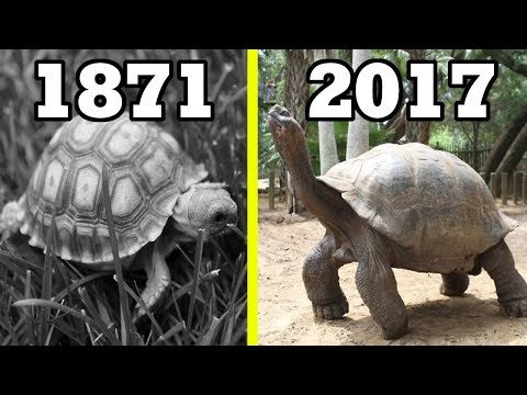 Top 10 OLDEST LIVING ANIMALS Throughout History
