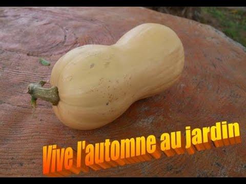 101-potager-fin-octobre,-recette-gratin-de-butternut-et-crozets