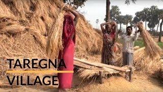 Farmland in Taregna Village | India Video