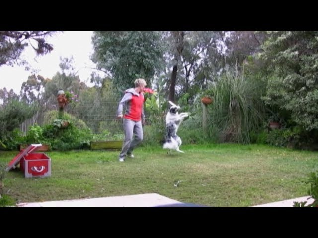 Splash's old pirate canine freestyle routine