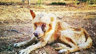 Amazing recovery of dog so ill and sick everyone called ZOMBIE