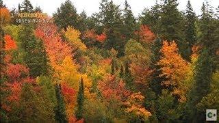 가을 단풍 명소! 캐나다 앨곤퀸 주립공원