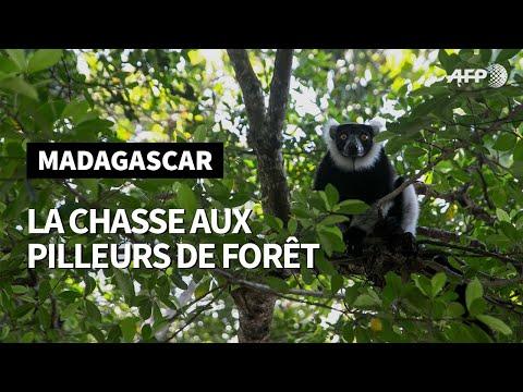 Madagascar: une brigade privée chasse les braconniers pilleurs de forêt I AFP Reportage