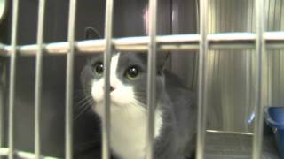 ✵ Cat Adoption & Cat Rescue: Tips for Adopting a Cat from a Shelter