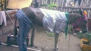 Kituko cha Mwaka