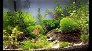 Mein Aquarium - Die ersten 6 Monate