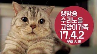수리노을 LIVE ] 17/4/2(일) 8:15PM 5마리 고양이가족 방송【SURI&NOEL】