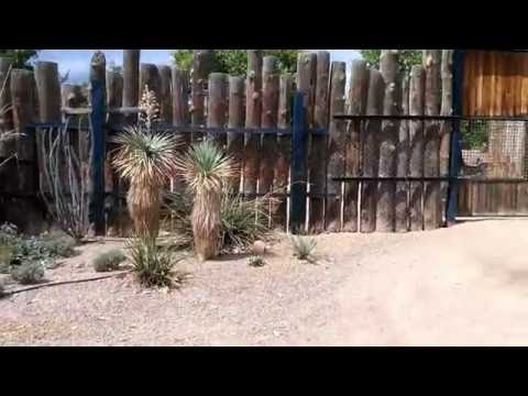 Train Ride at the Albuquerque Zoo