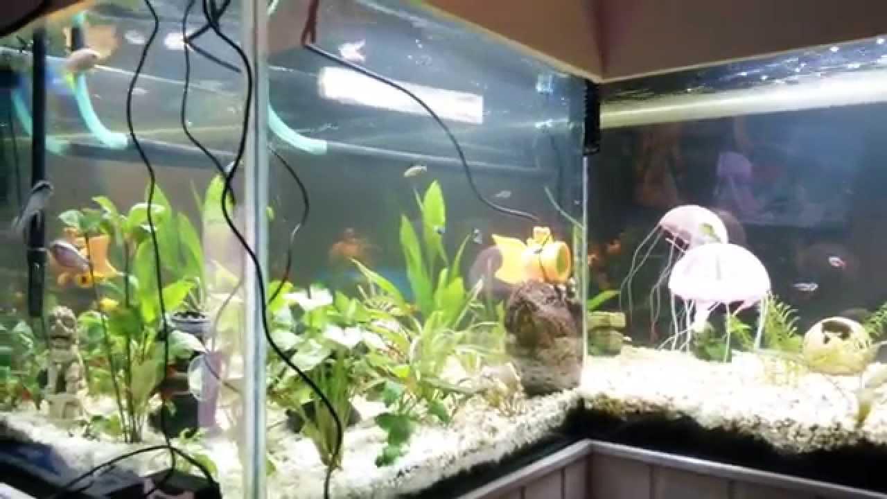 dit is mijn 600 liter aquarium youtube. Black Bedroom Furniture Sets. Home Design Ideas