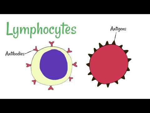 Cell Defence: Lymphocytes and Phagocytes