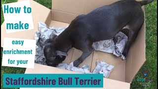 How to make easy enrichment for your Staffordshire Bull Terrier