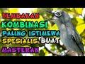 Masteran Tembakan Mewah Kombinasi Wit Wit Paling Dicari  Mp3 - Mp4 Download