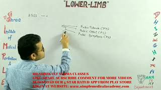 92. Anatomy, LOWER LIMB, How to draw the Lower limb in simplest way, By DR. SHRIKANT VERMA CLASSES