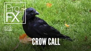 Crow Call | Animal sound effects | ProFX (Sound, Sound Effects, Free Sound Effects)