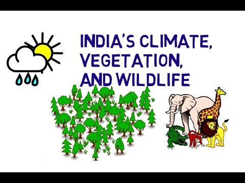 Geography l India's Climate, Vegetation & Wildlife  l 8th Chapter l NCERT l 6th Class