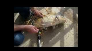 Ловля риби на Козацькому Острові