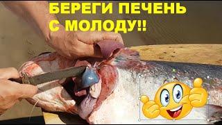 Секрет приготовления печени сома. Нижняя Волга тур
