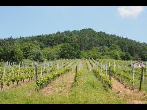 Visiting Fürst in the German wine region of Franconia