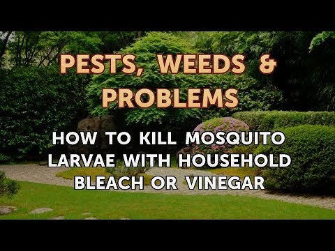 How to Kill Mosquito Larvae with Household Bleach or Vinegar