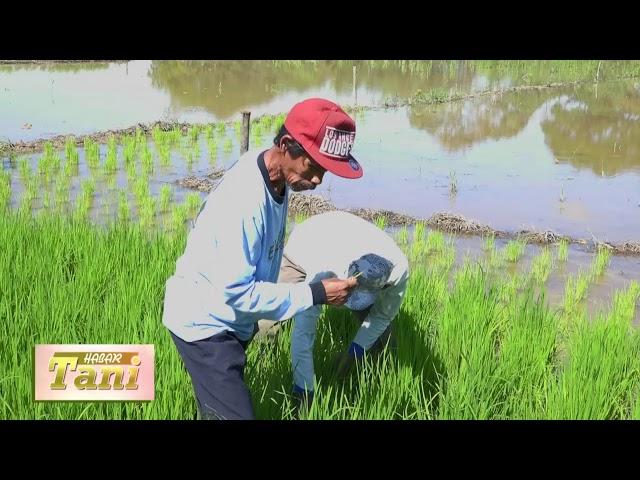 Habar Tani Episode 4  - Penggunaan Pestisida Alami Segmen 1 #TV Tabalong